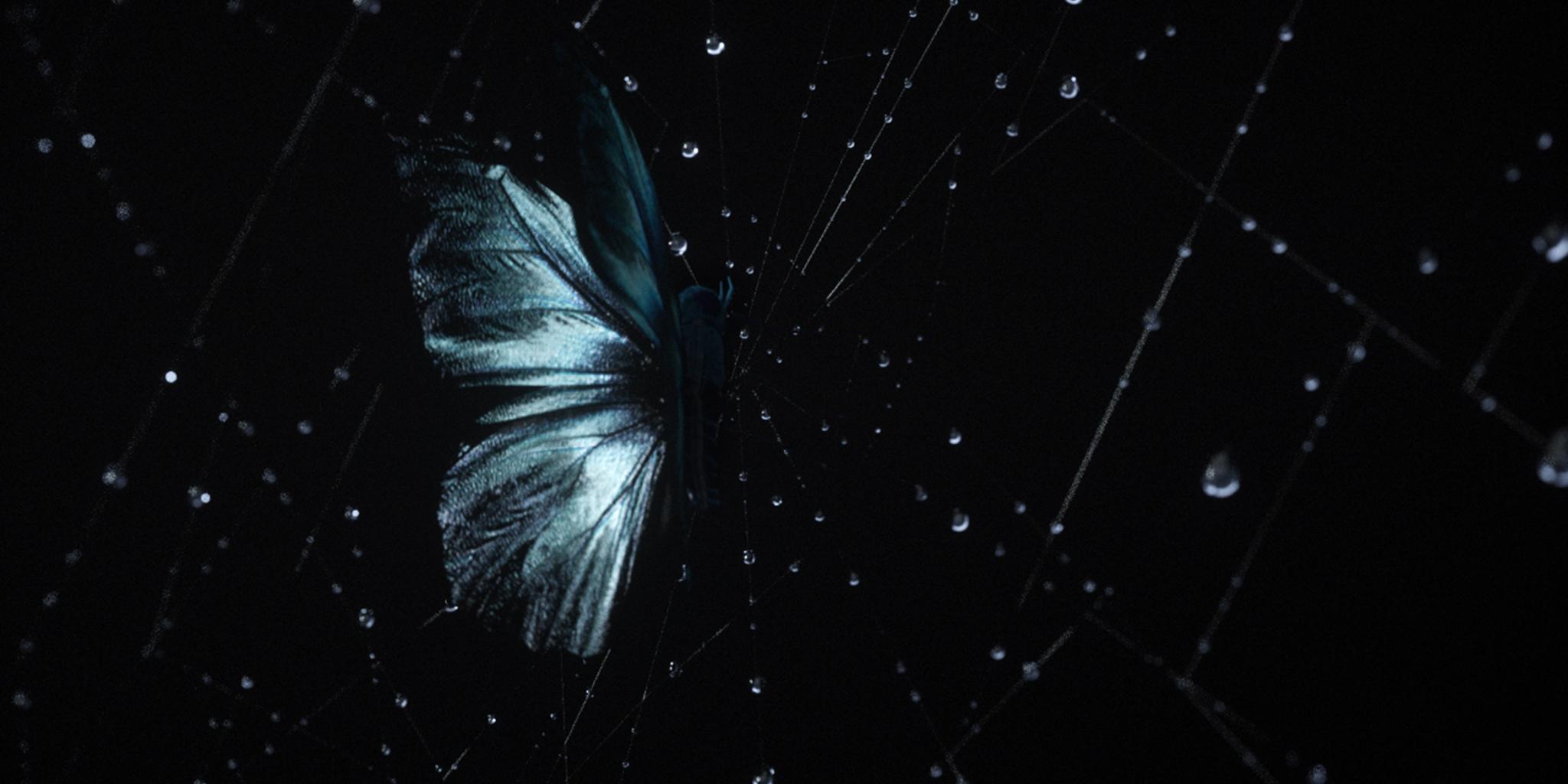 Web_Spider_01